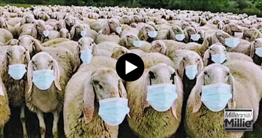 Dear Sheeple
